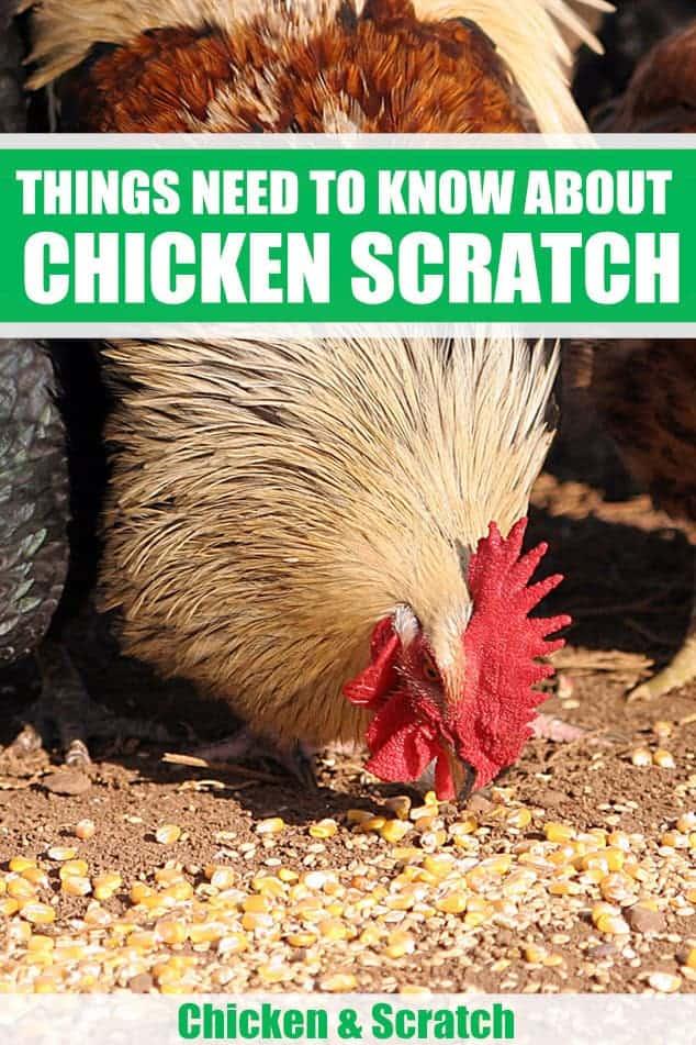 what is chicken scratch