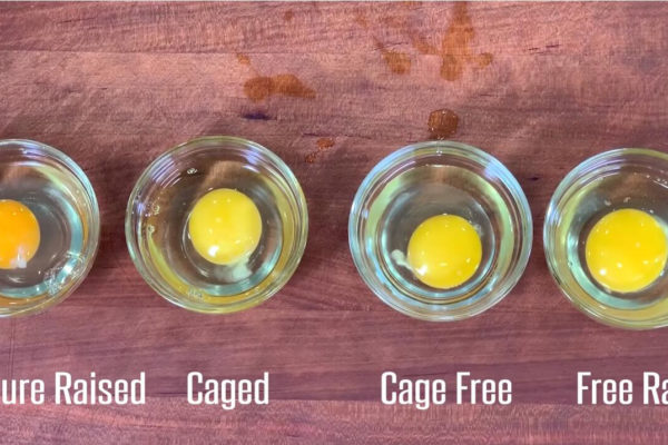 Cage-Free vs. Free-Range Eggs: Don't Waste Your Money