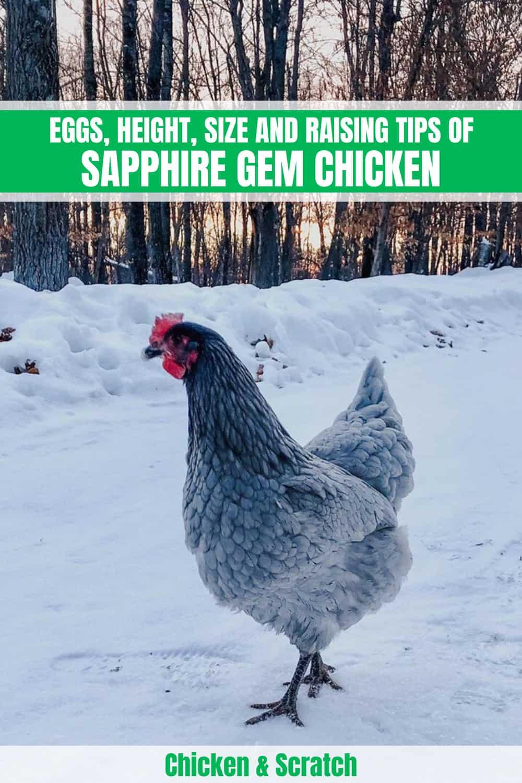 sapphire chicken