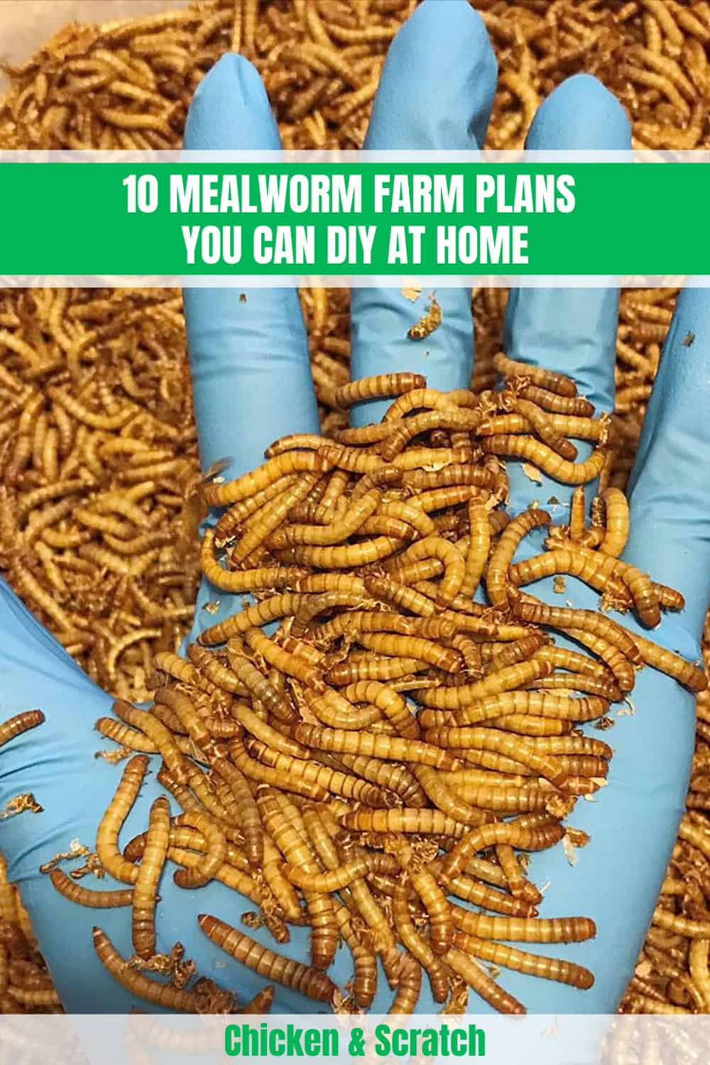 10 Mealworm Farm Plans You Can Diy At Home