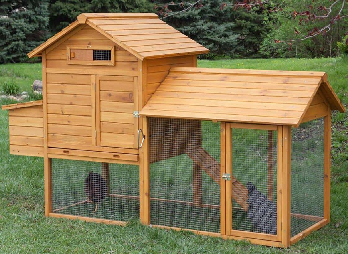 how to protect chickens from predators