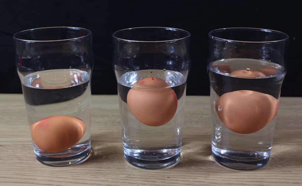 eggs float