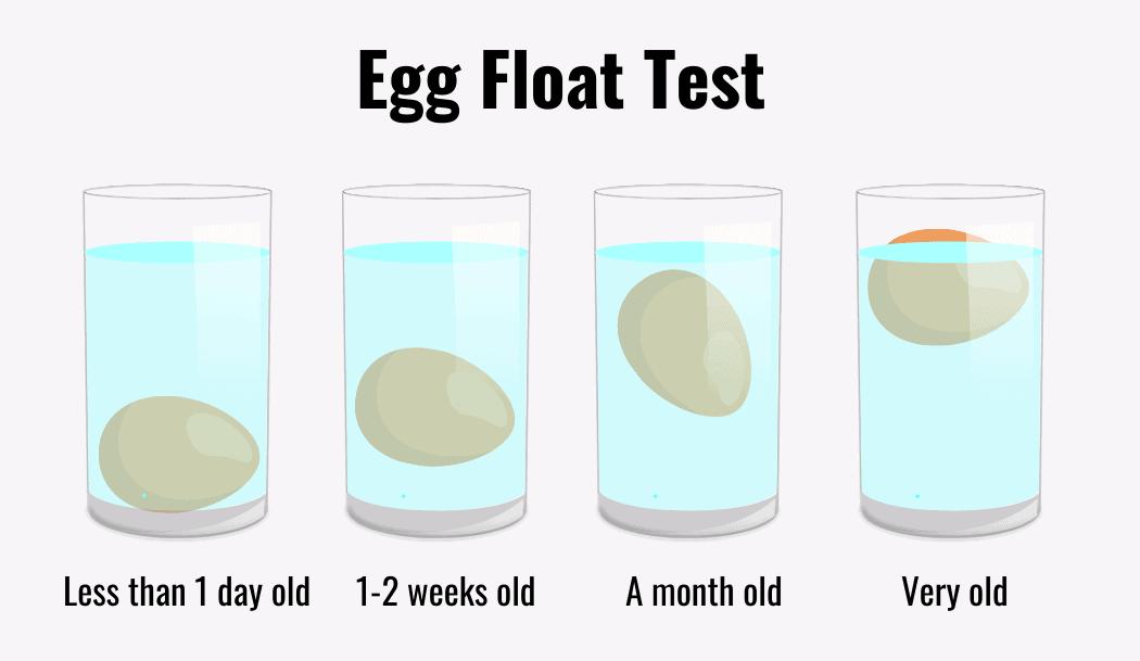 eggs float