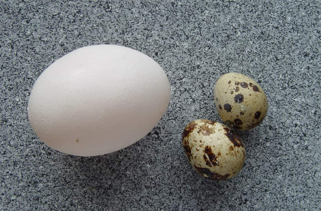 quails eggs nutrition