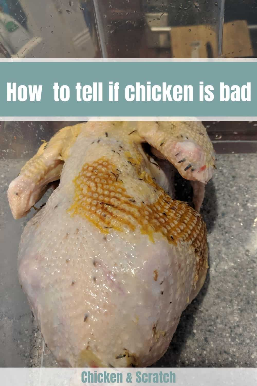 what does bad chicken smell like