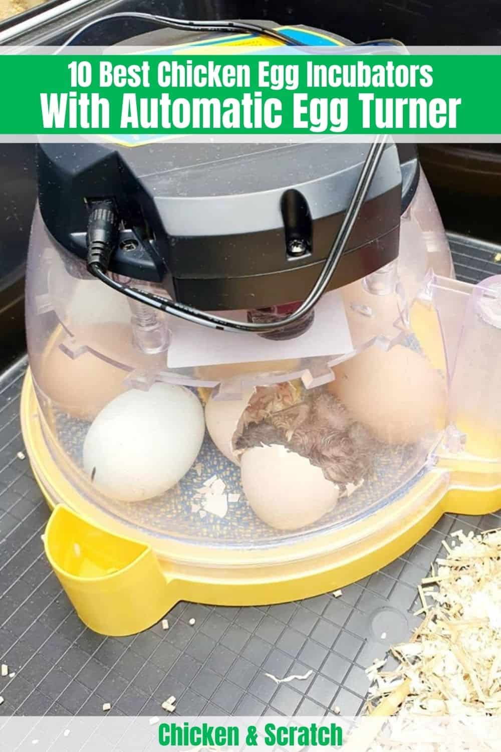 Best Chicken Egg Incubator