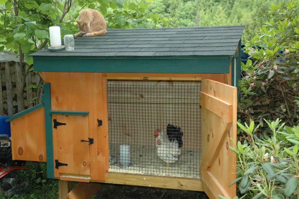 best chicken coops for sale