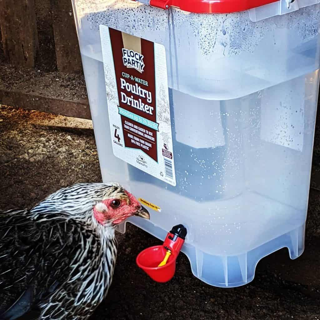 best chicken watering system