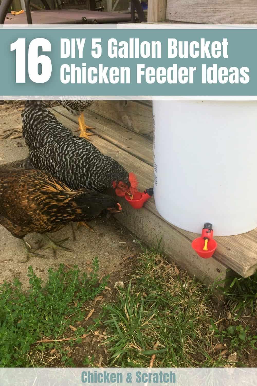 5 gallon bucket chicken feeder