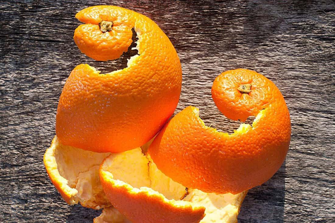 can chickens eat orange peels