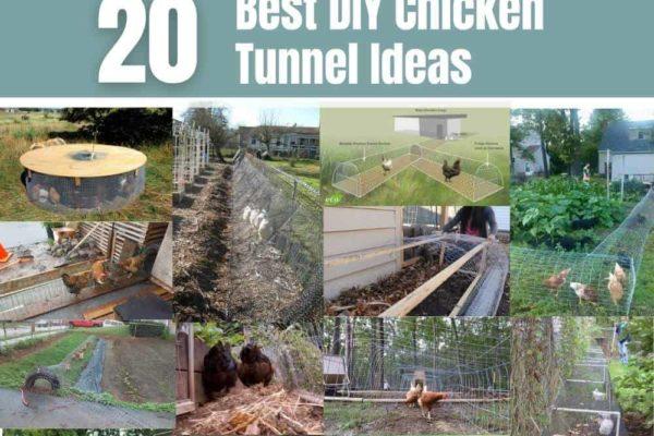 20 DIY Chicken Tunnel Ideas