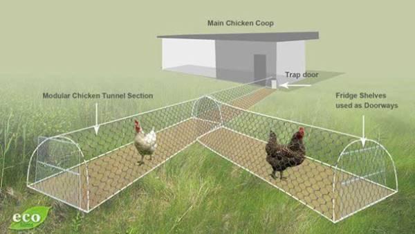 chicken tunnel plans
