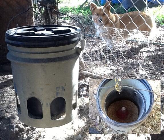 diy chicken waterer 5 gallon bucket