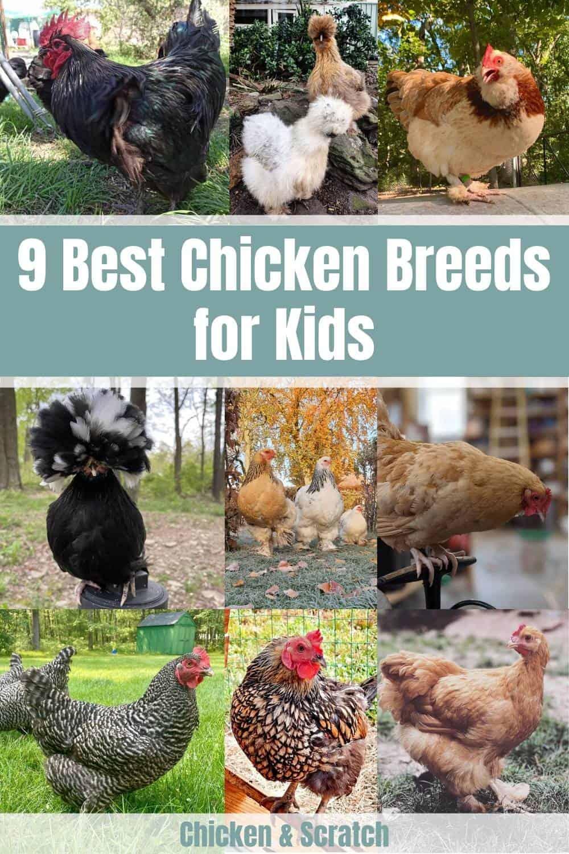 best chickens for kids