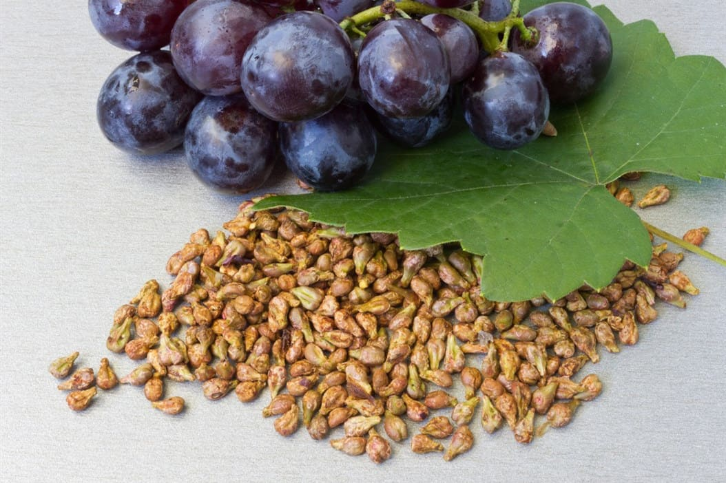 can chickens eat grapes with seeds