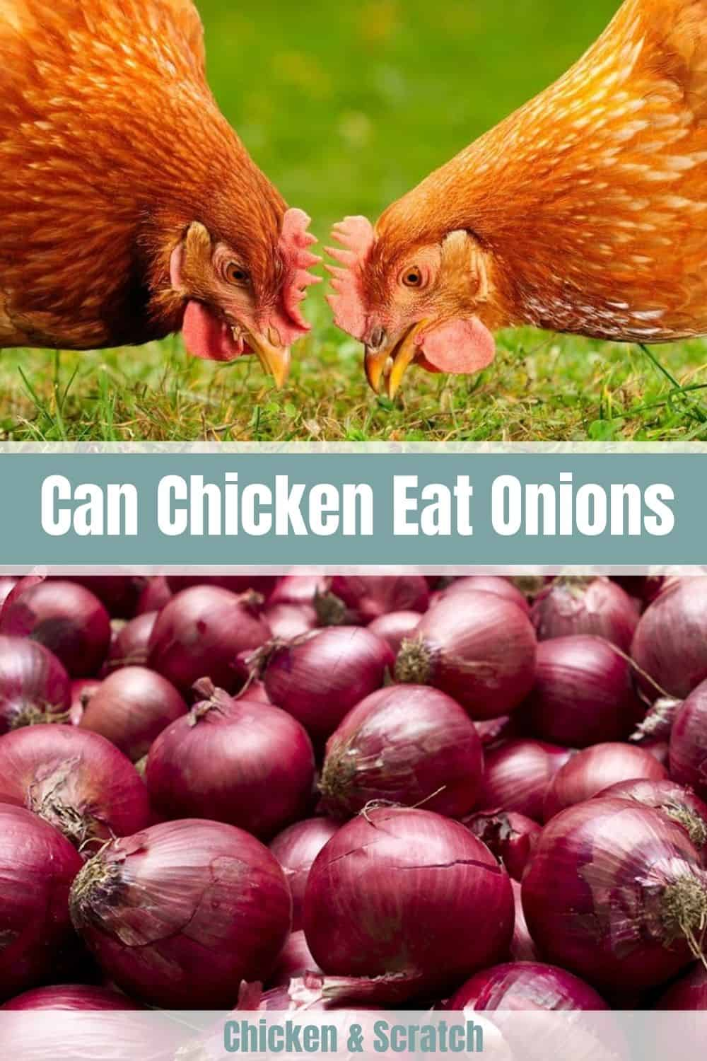can chickens have onions