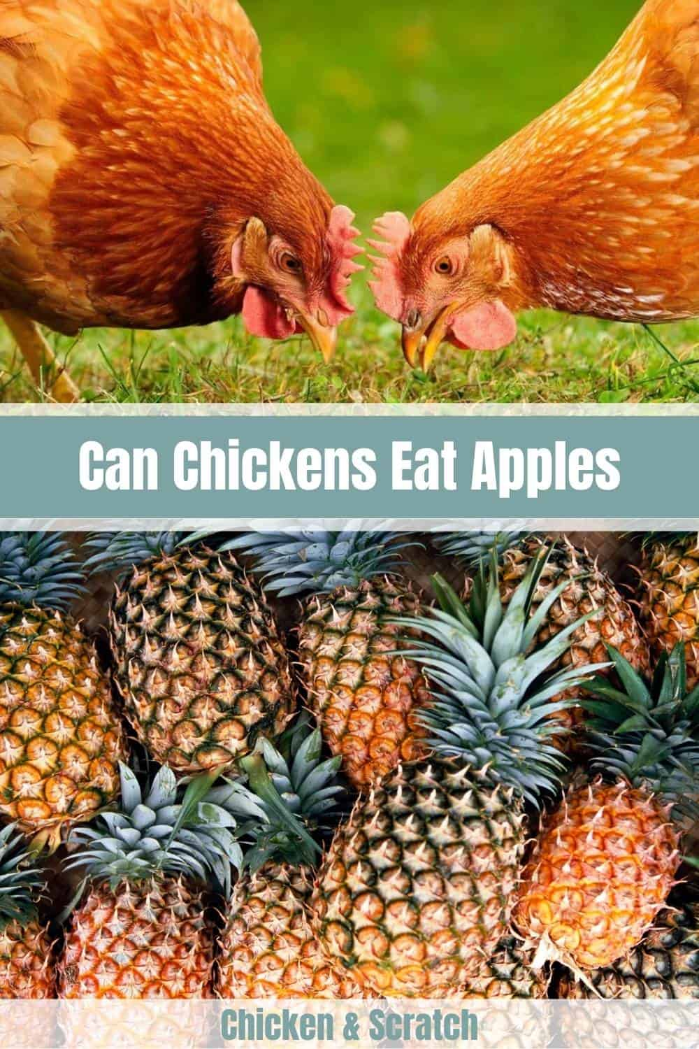 can chickens have pineapple