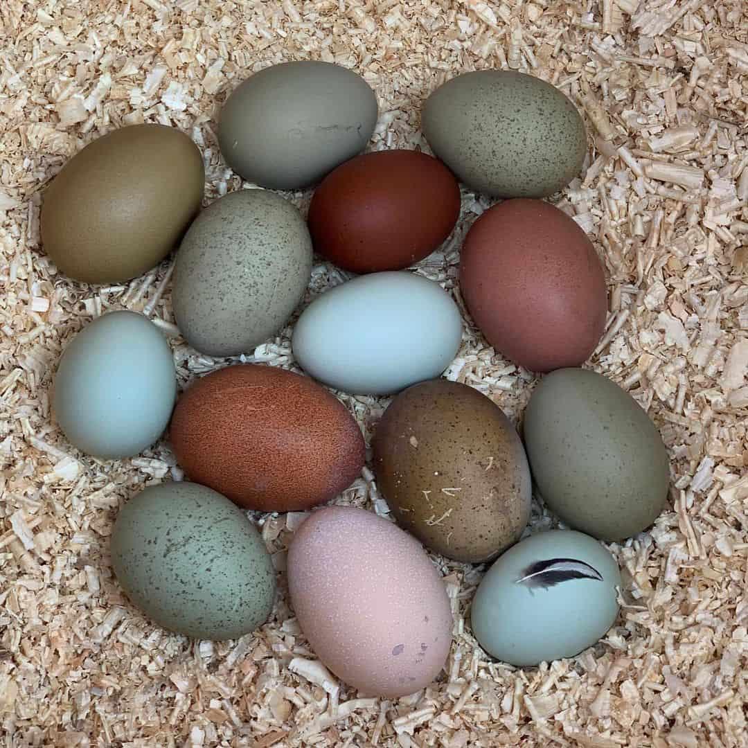 can eggs go bad