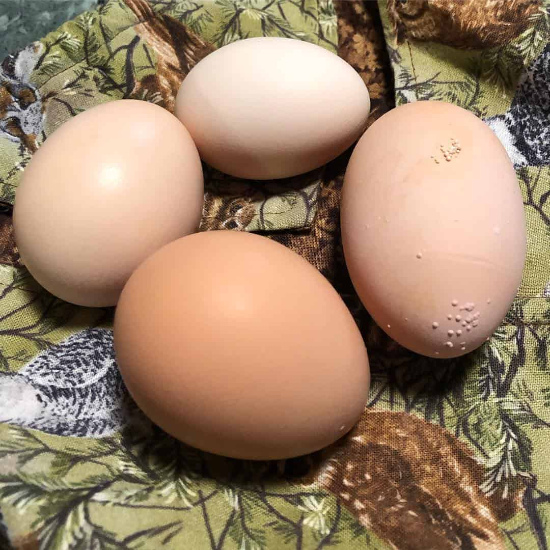 egyptian fayoumi egg color