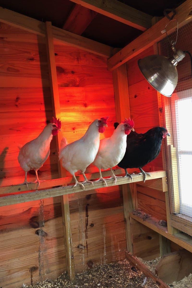 heat chicken coop