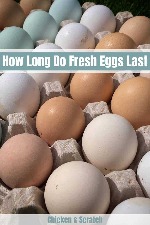 how long eggs last