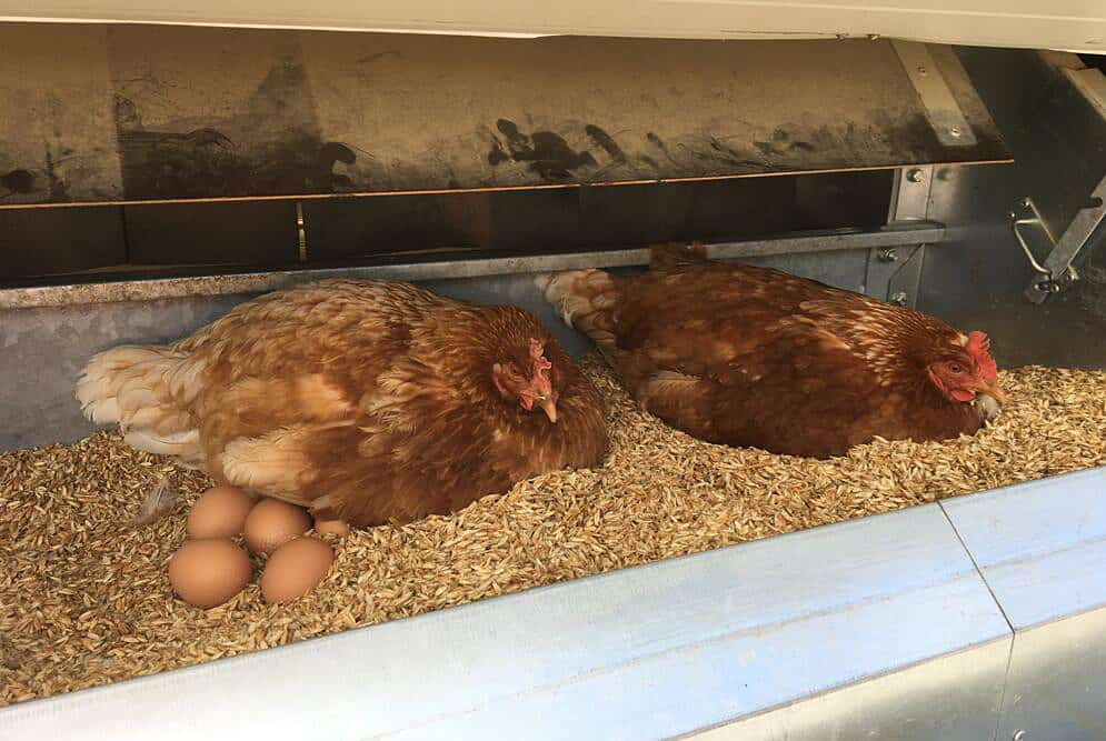how to sell chicken eggs