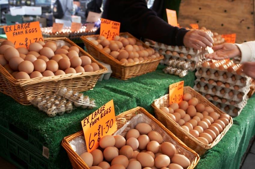make money raising chickens