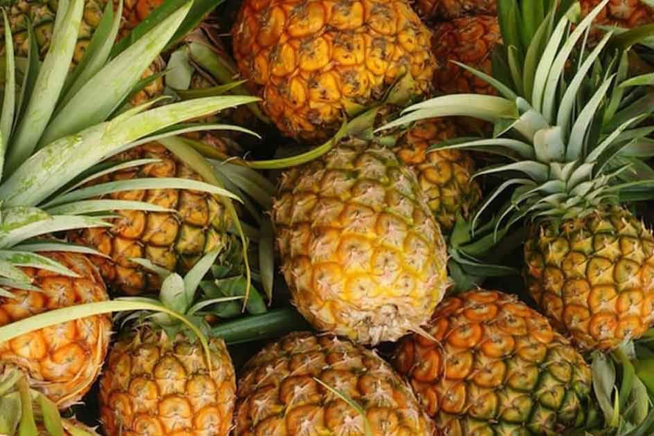 pineapple for chickens