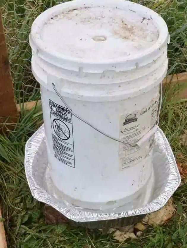 5 Gallon Chicken Feeder