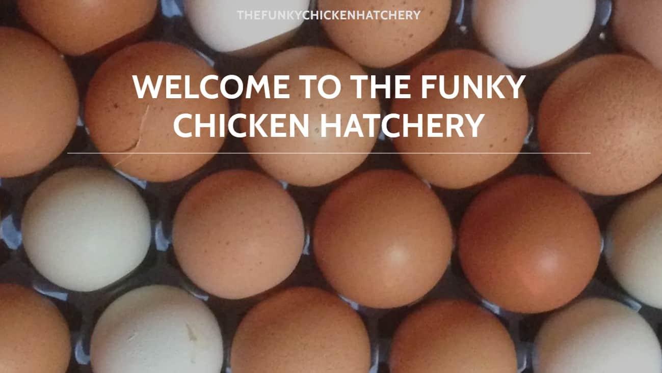 Funky Chicken Hatchery