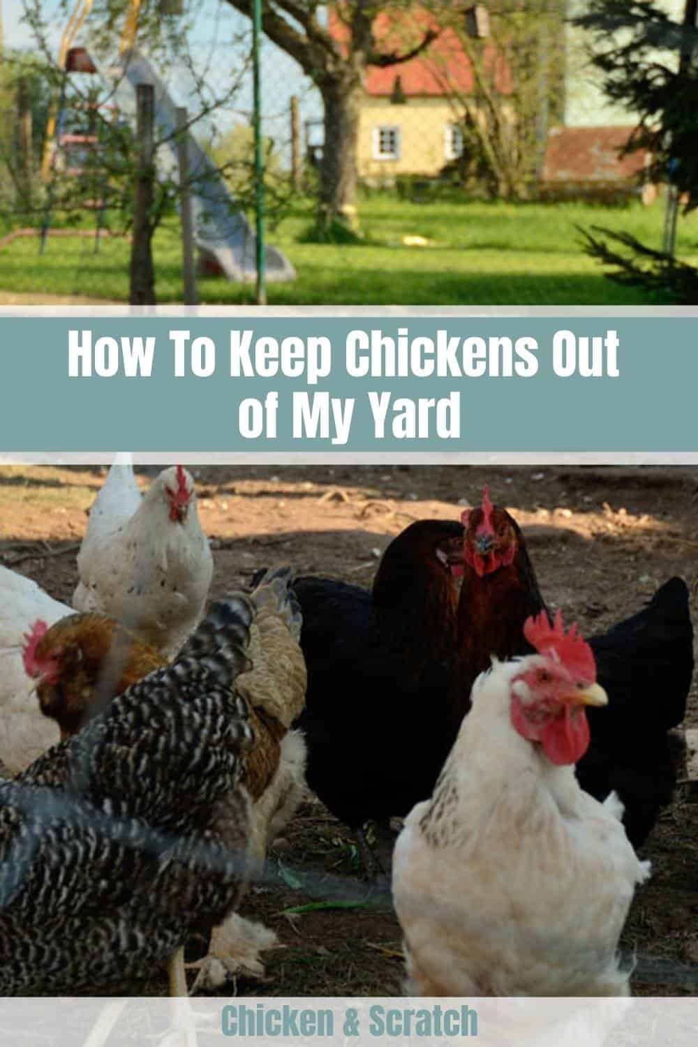 Keep Chickens Out of My Yard