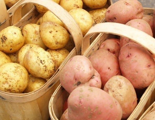 Potatoes vs. sweet potatoes