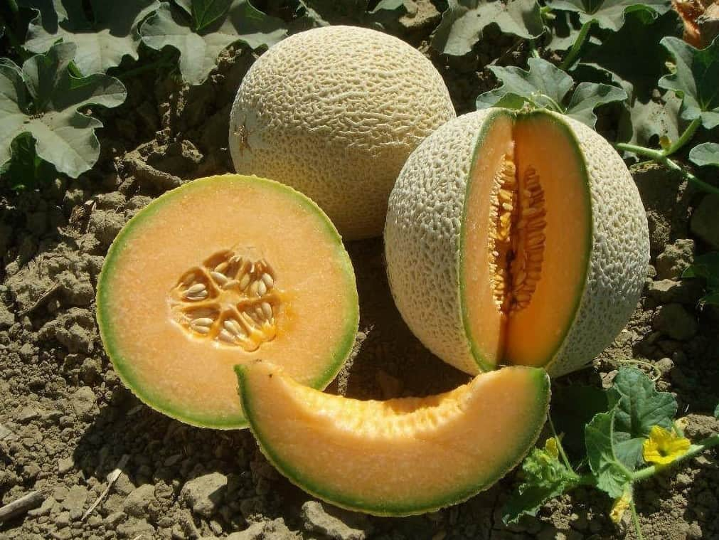 can chickens eat cantaloupe seeds