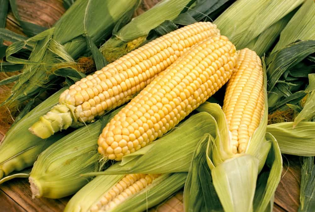 can chickens eat corn on the cob