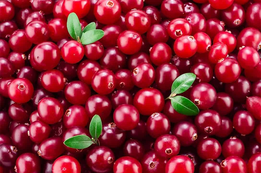 can chickens eat raw cranberries