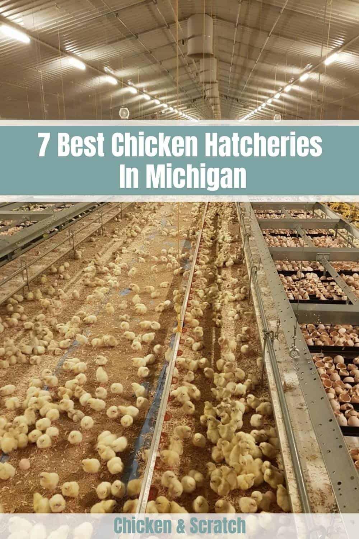 chicken hatcheries in michigan