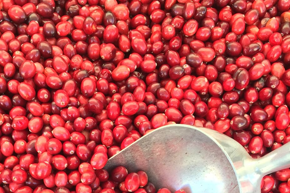 chickens eat raw cranberries