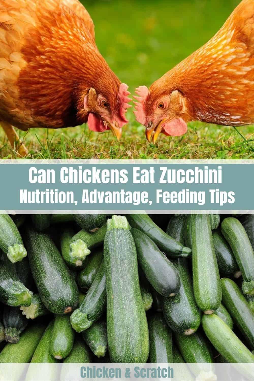 chickens eat zucchini