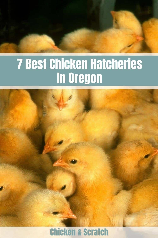 chickens for sale oregon