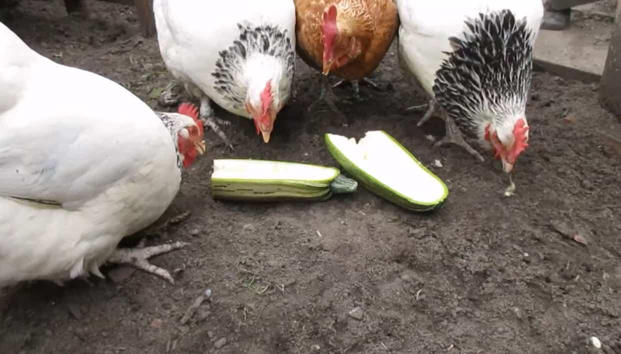 eating raw zucchini safe