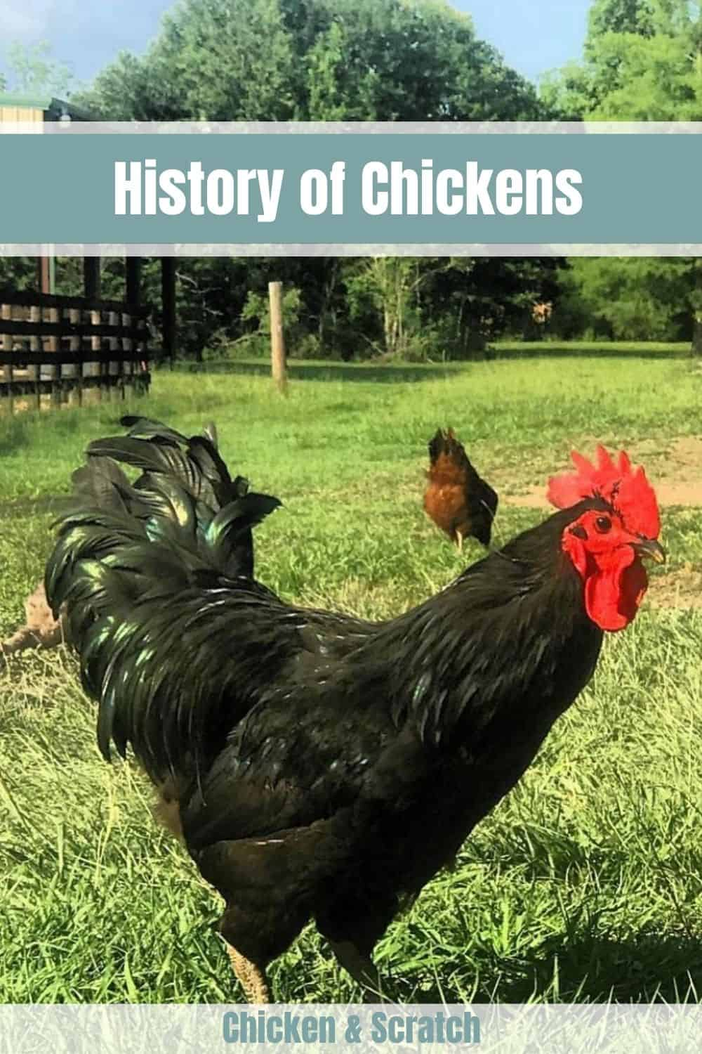 history of chickens