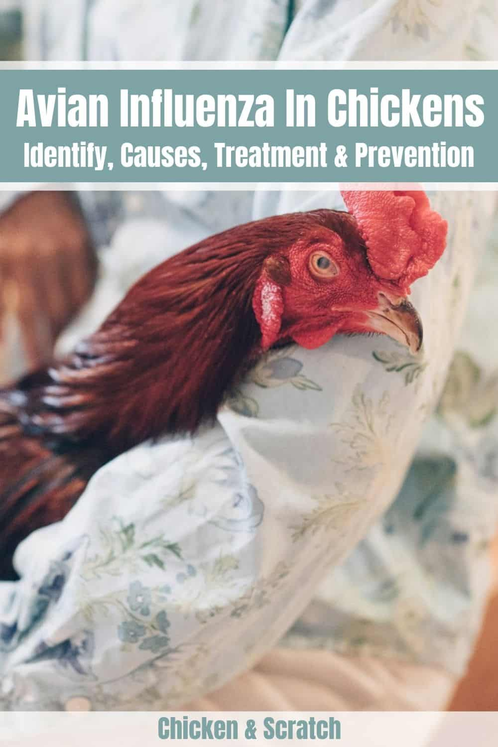 how to prevent bird flu in chickens