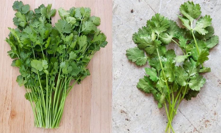 cilantro is good for