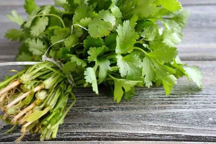 eating cilantro
