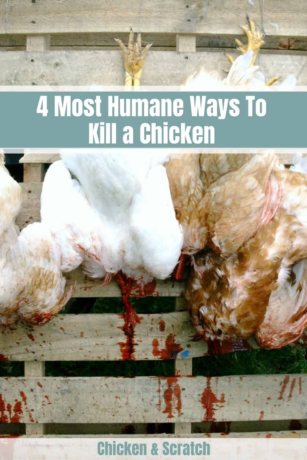 most humane way to kill a chicken