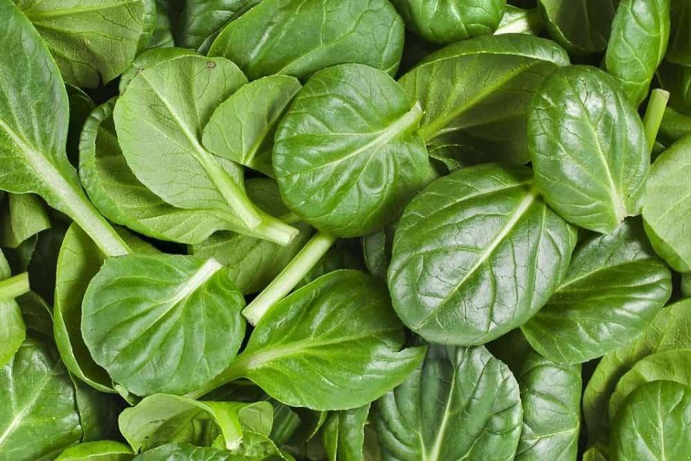 spinach and chicken diet